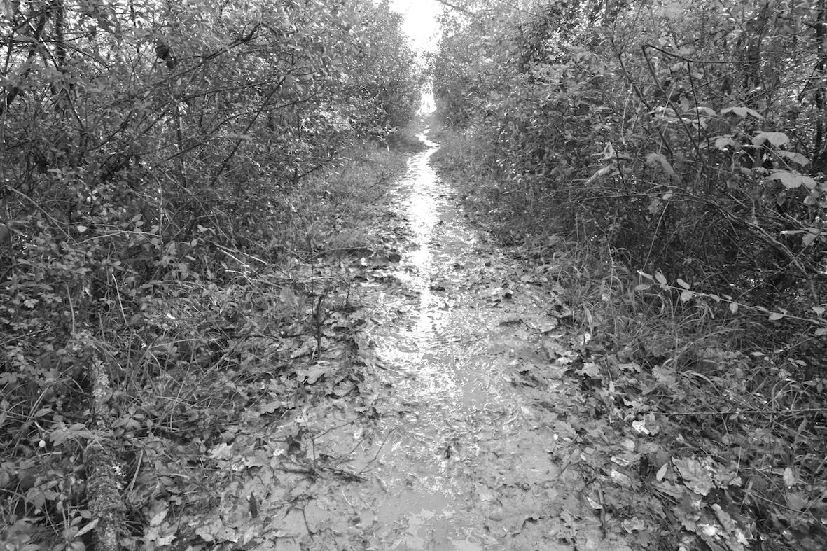 Tratturo fangoso attraverso il Bosco di Foglino